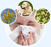 indoors allergen